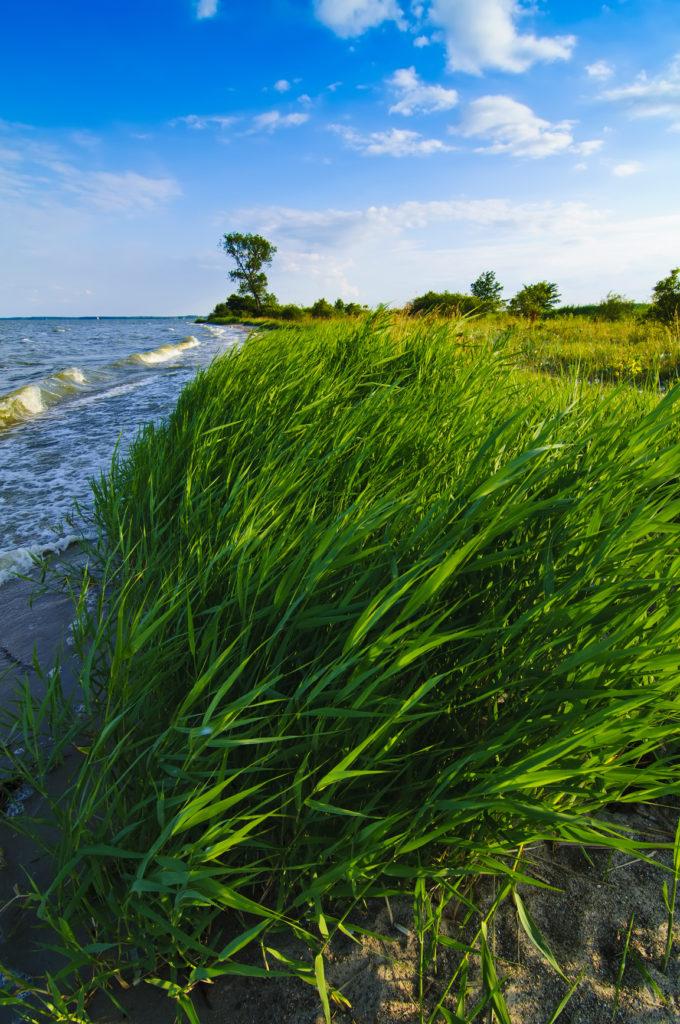 Das Achterwasser und das Stettiner Haff machen Usedom zu Insel